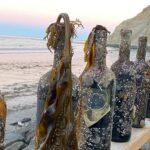 Sacaron vinos que estuvieron 6 meses a 11 metros de profundidad